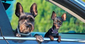 Unsere Hunde im Auto - was gibt es zu beachten?