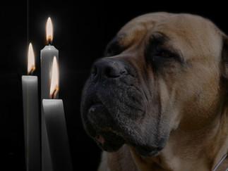 Der Hund als Seelentröster