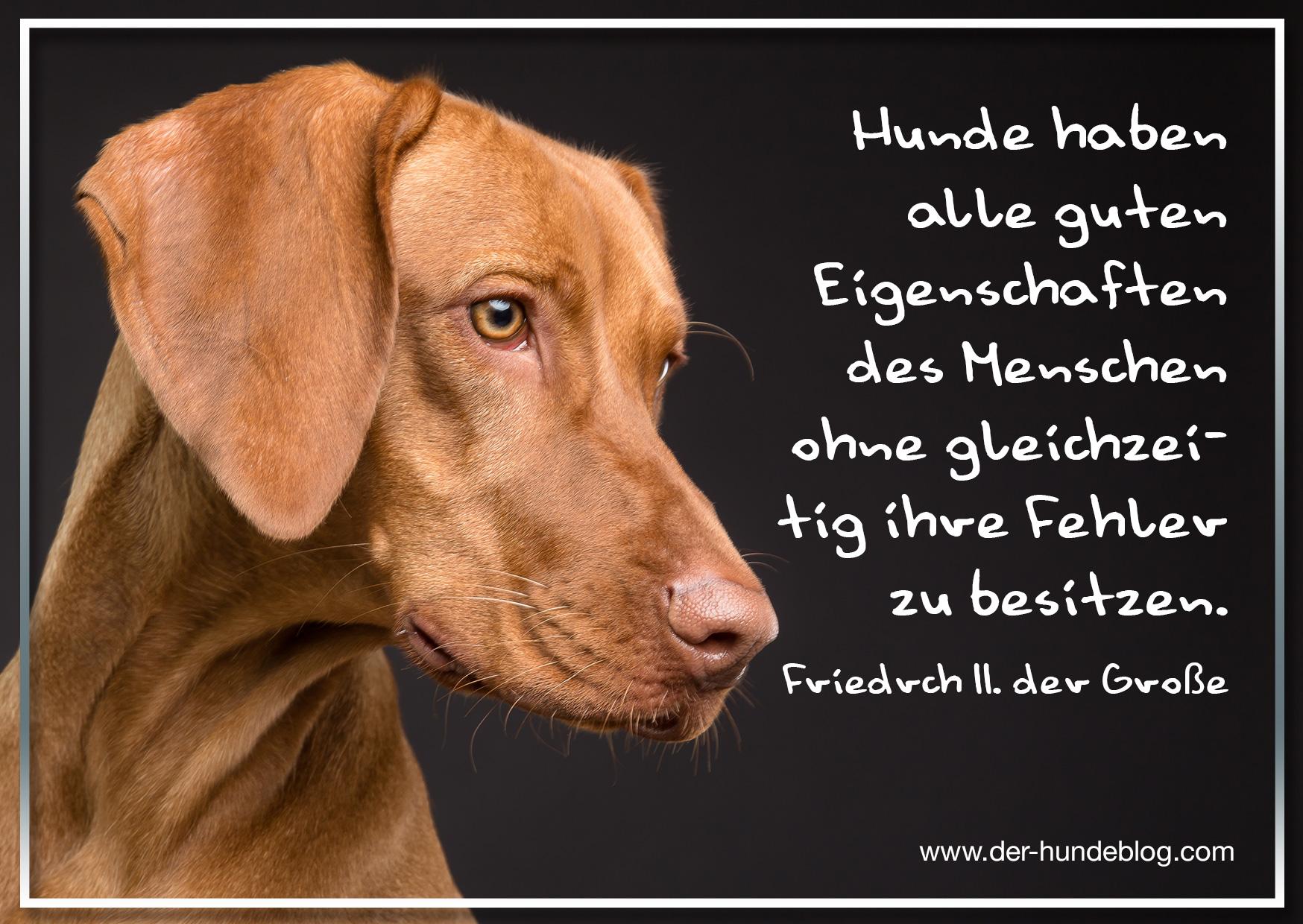 der-hundeblog-schoene-sprueche-hunde-15