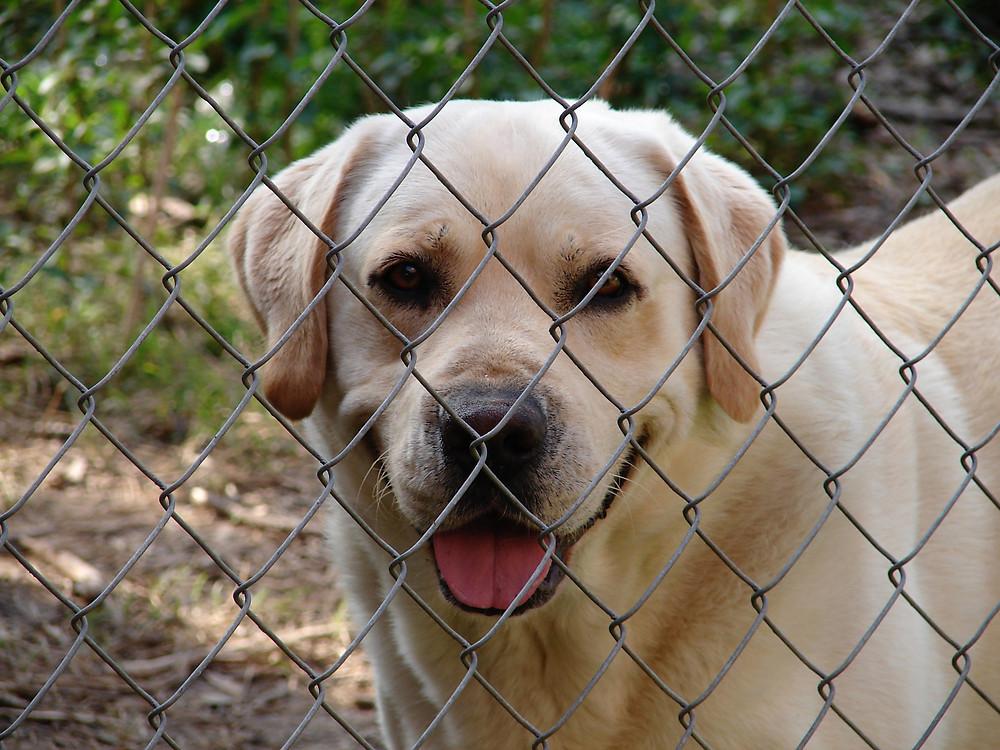 Hund im Zwinger - Hundepension