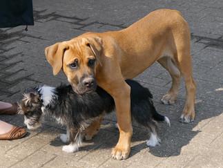 Hundeschulen - wichtig oder nicht?