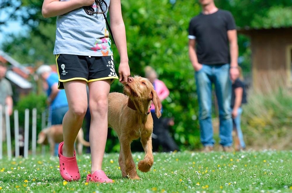 Kind geht mit dem Hund gassi