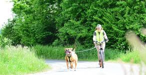 Dog-Scootern - oder wie ich mit meinem Hund Tretroller fahre