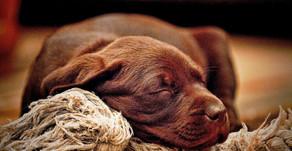 Was träumt dein Hund?