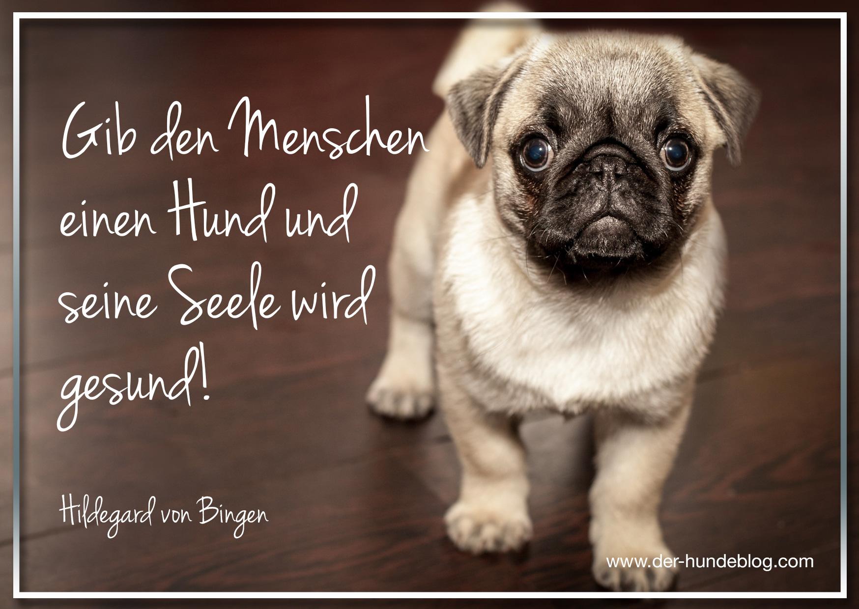 Der Hundeblog I Hundespruche Und Zitate