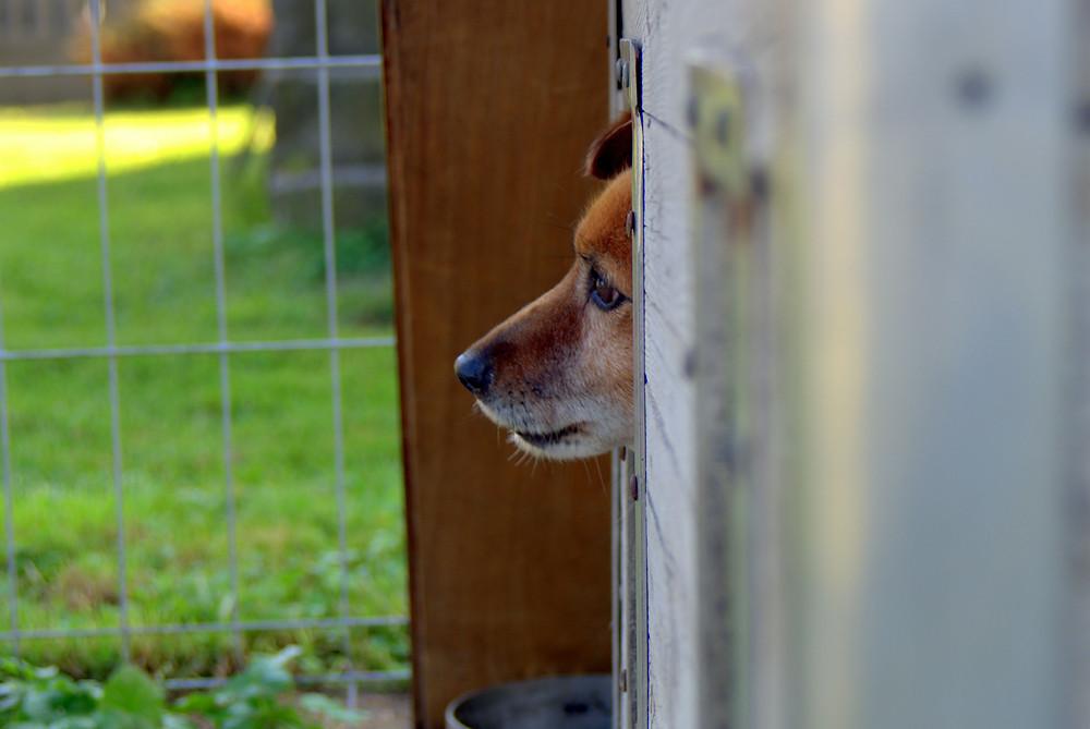 Hund in Hundepension