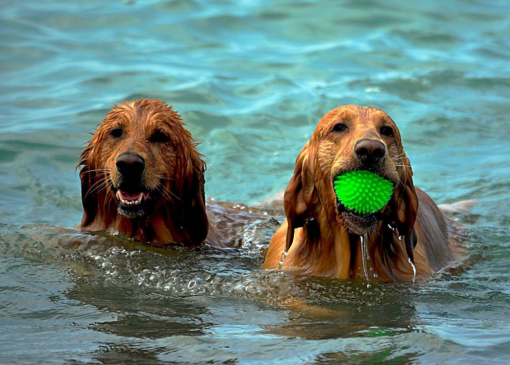 Hunde im Wasser - der Hundeblog