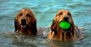 Sommer, Sonne, Strand - Hund? Für viele lieber nicht!