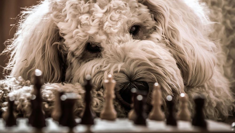 Mischlingshund Boomer, der Streuner