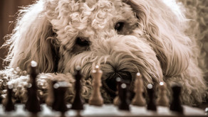 Berühmte Hunde - meine Lieblinge!