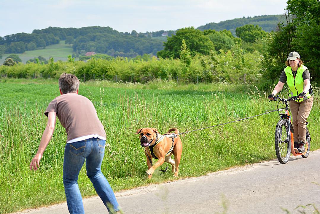 Zughundesport Dog Scooter