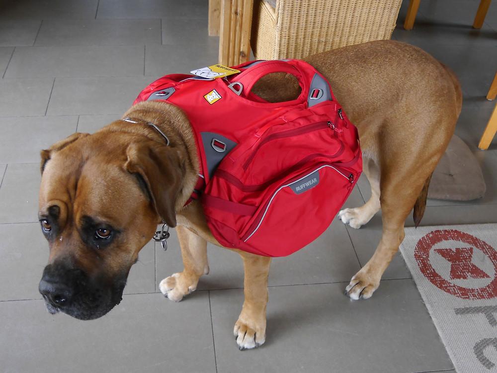 Rucksack für Hunde, Hundetraining mit dem Rucksack