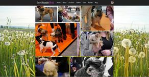 Freut Euch - es gibt eine neue Galerie im Hundeblog!