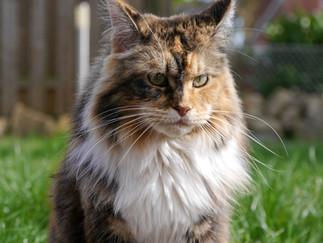"""Darum """"spricht"""" Deine Katze mit Dir"""