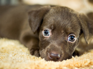 Auf den Hund gekommen - oder: Ach, ist der süüüß...