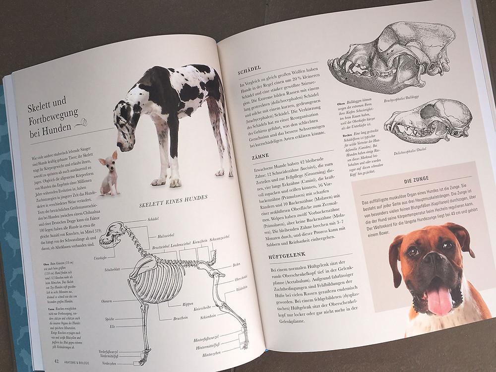 Der Hund - Nachschlagwerk über Hunde