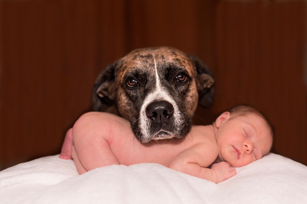 Hund und Baby