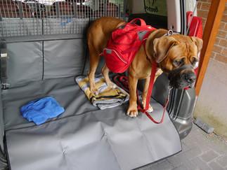 Nie mehr Hundehaare im Kofferraum!