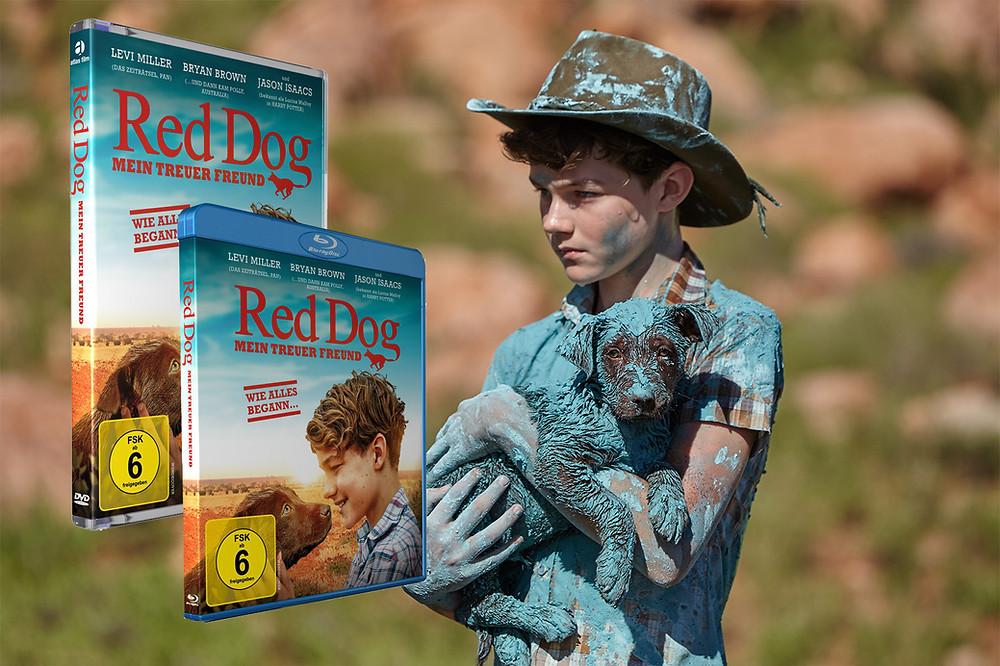 red dog - hundefilm