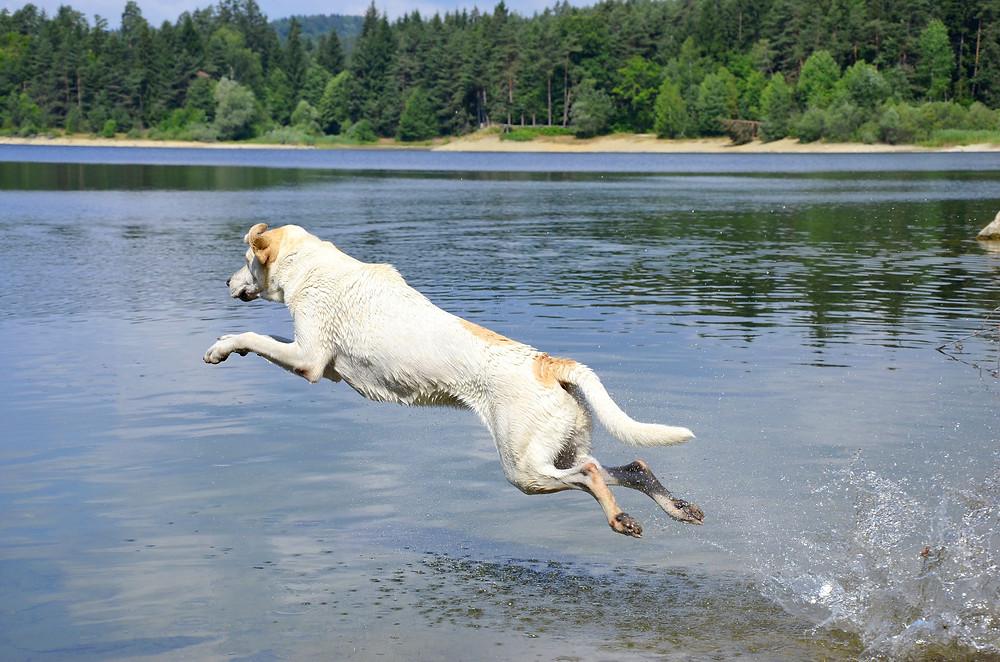 Hund am Badesee