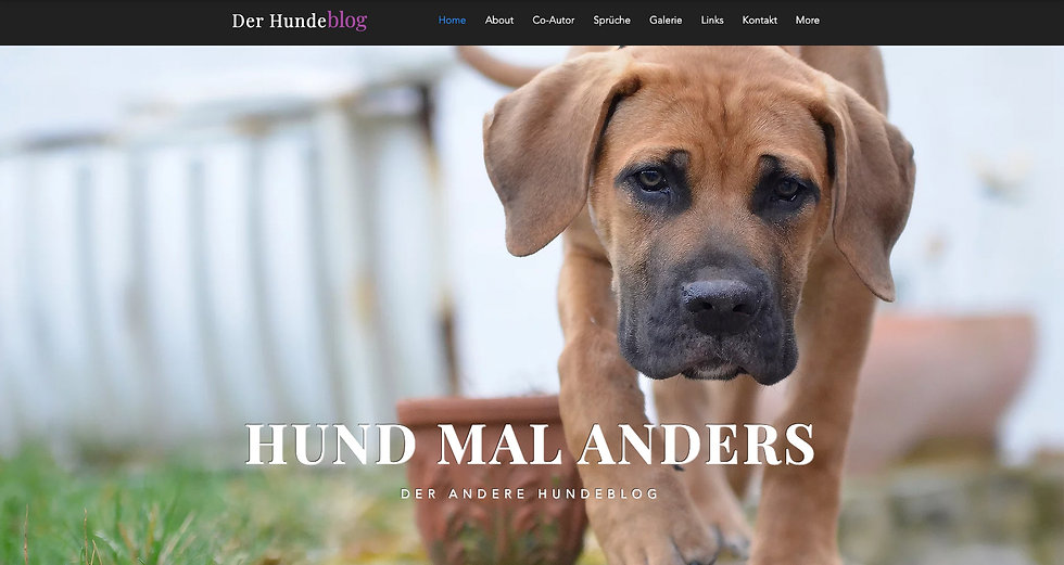 website-der-hundeblog-titelbild.jpg