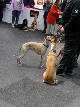 sehr schlanke Hunde