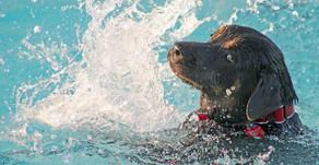 Alle Hunde können schwimmen - Falsch!