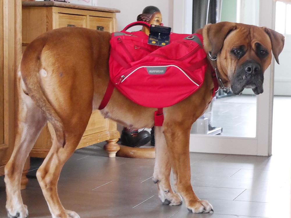 Hundetraining mit Rucksack von Ruffwear