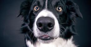 Sturer Dickschädel - warum benimmt mein Hund sich so?