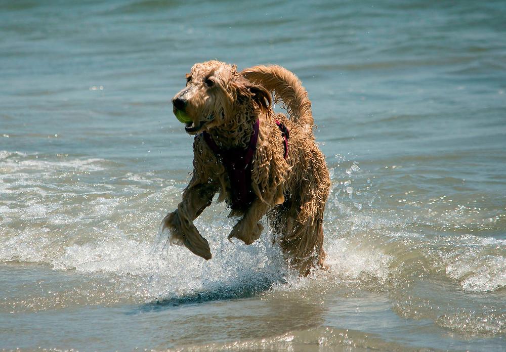 Hund spielt im Wasser - der Hundeblog