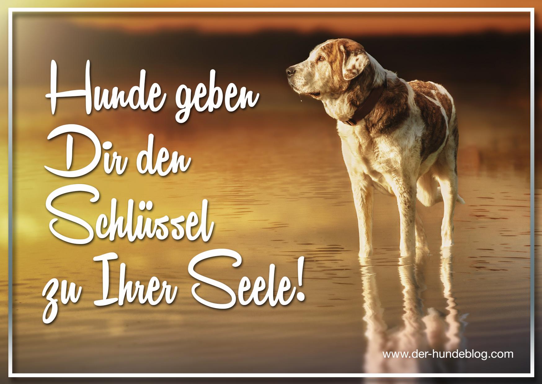 der-hundeblog-schoene-sprueche-hunde-9