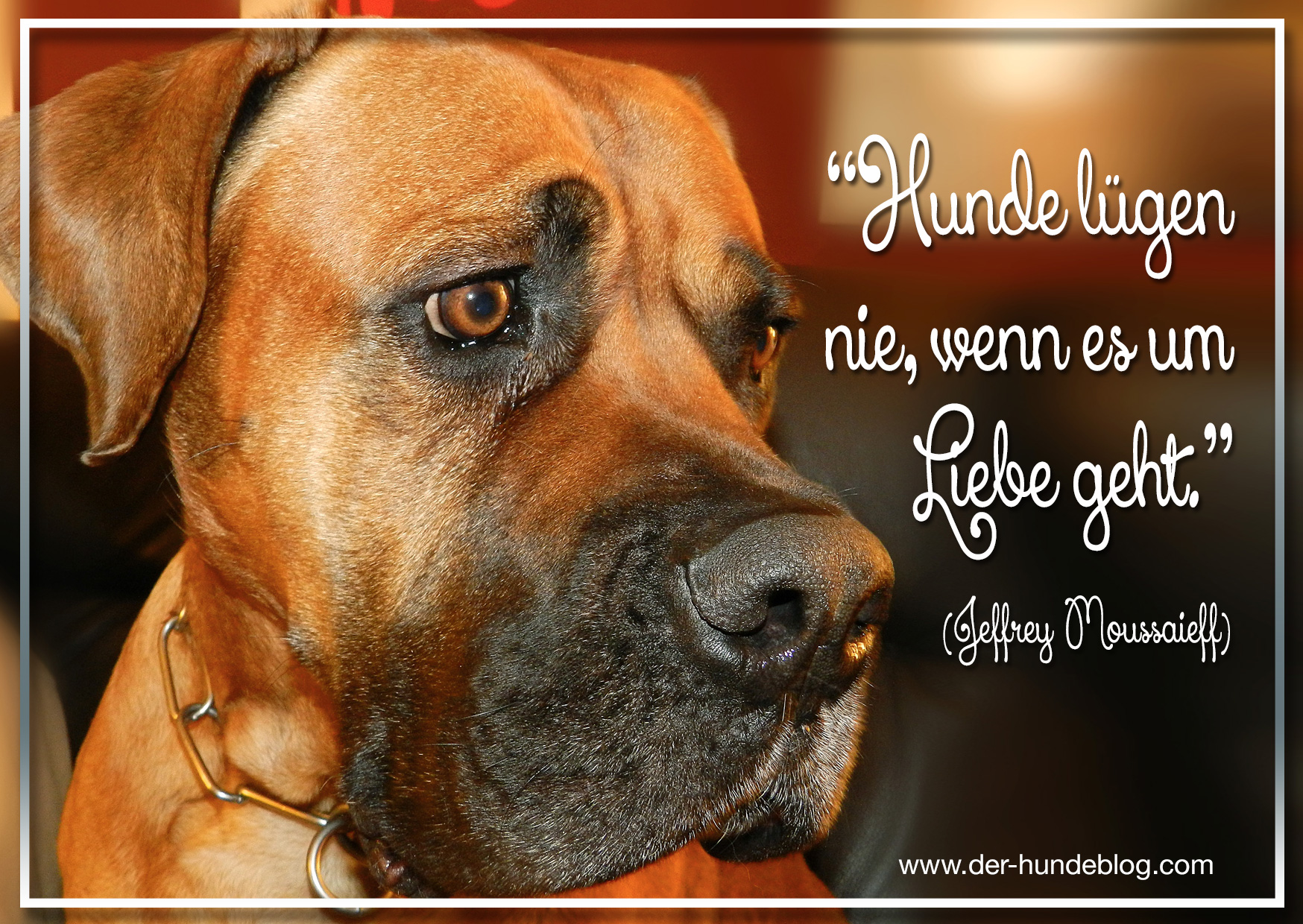 der-hundeblog-schoene-sprueche-hunde-7