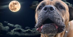 Hund bei Nacht!