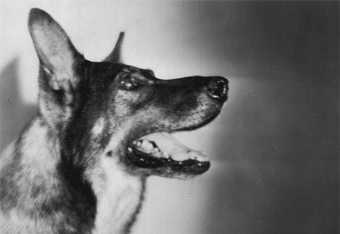 Schäferhund - Kommissar Rex