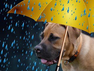 Hund im Regen - oder doch lieber nicht?