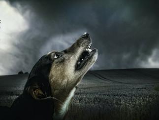 Hund beißt Einbrecher