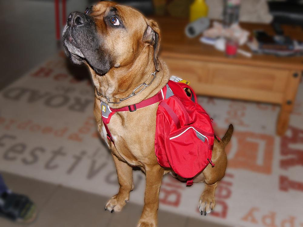 Hunderucksack von Ruffwear