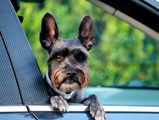 Unsere Hunde im Auto - Teil 2 - was, wenn dem Hund schlecht wird?