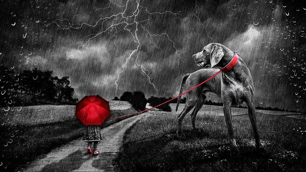 Hundespaziergang bei Regen