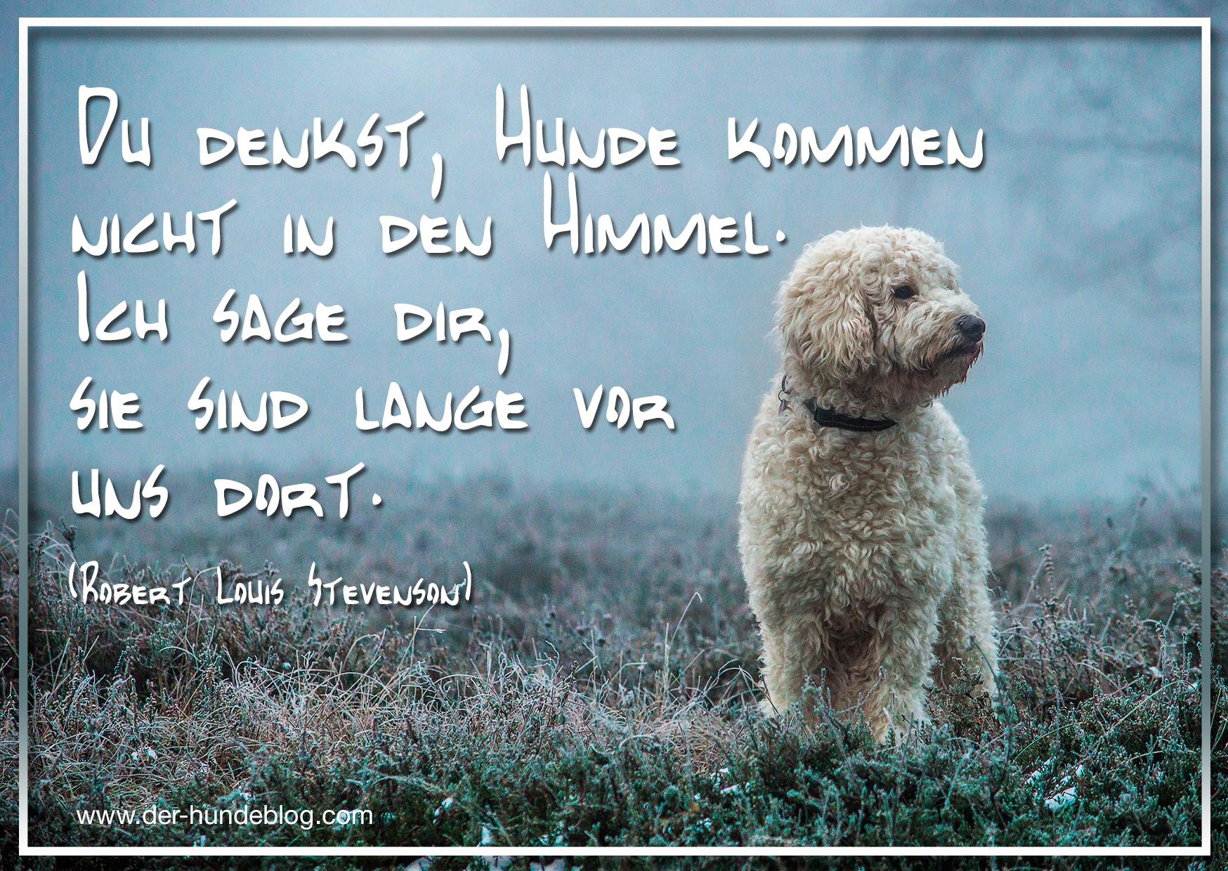 der-hundeblog-schoene-sprueche-hunde-3