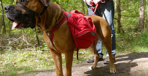 Mein Hunderucksack von Ruffwear* - Teil 2