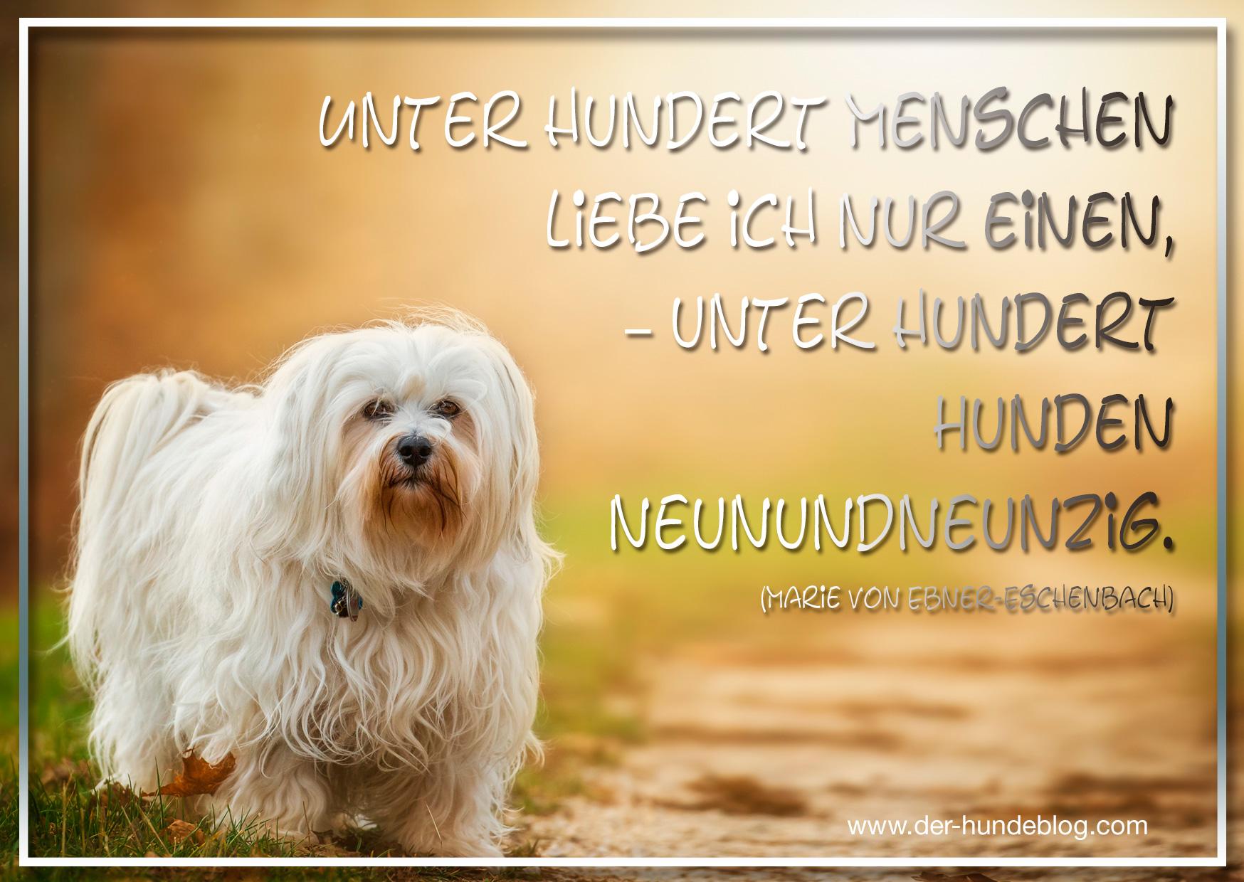 der-hundeblog-schoene-sprueche-hunde-5