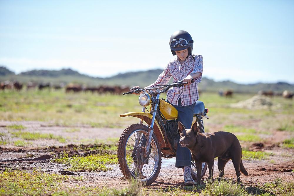 red dog - ein wunderschöner Film über einen Hund