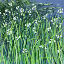 Spring Trailside Flowers