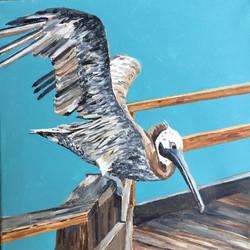 Day 11 Kure Pier Pelican