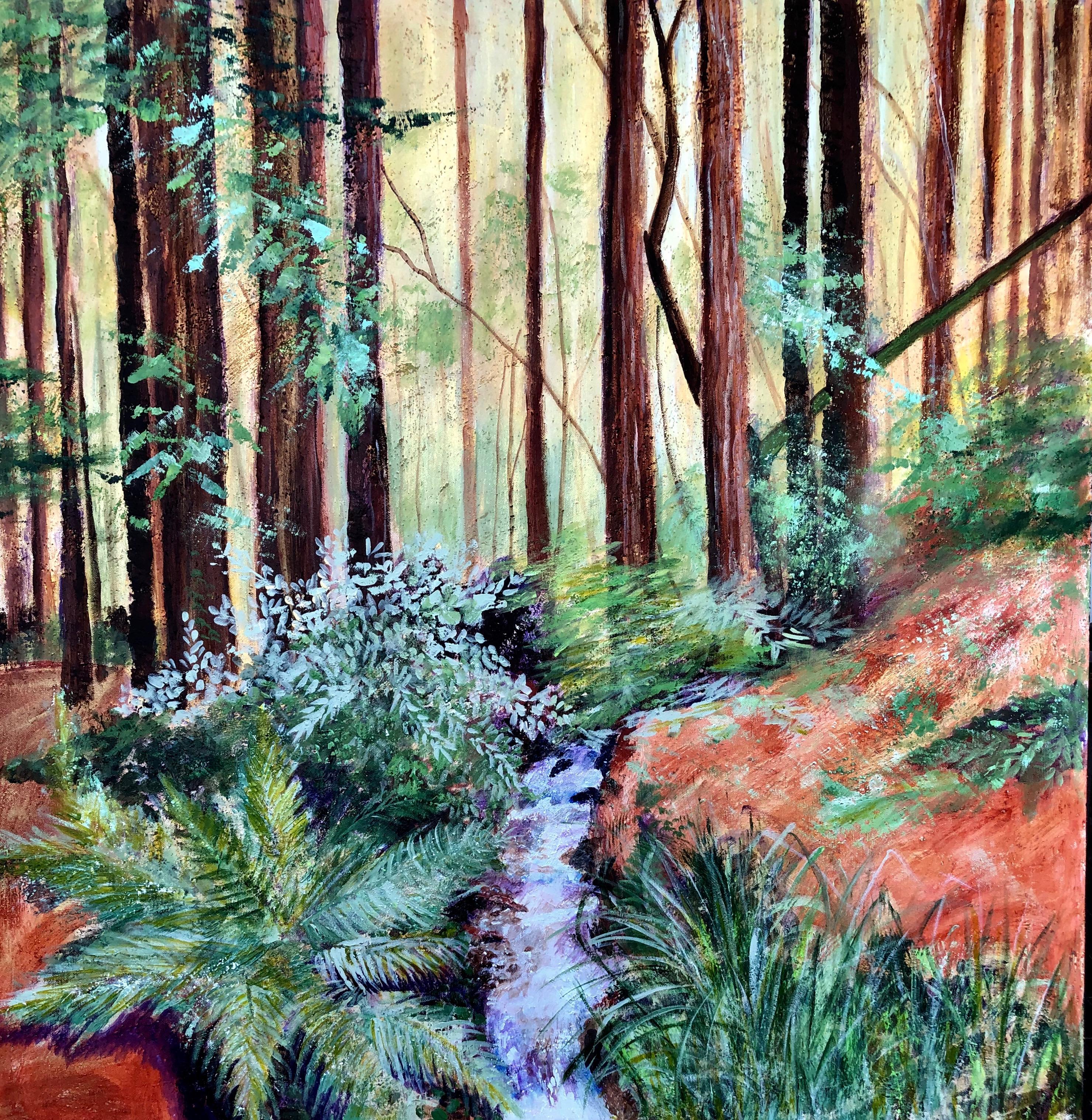 Walk in the Redwoods