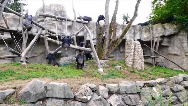 Walter Zoo A.mp4