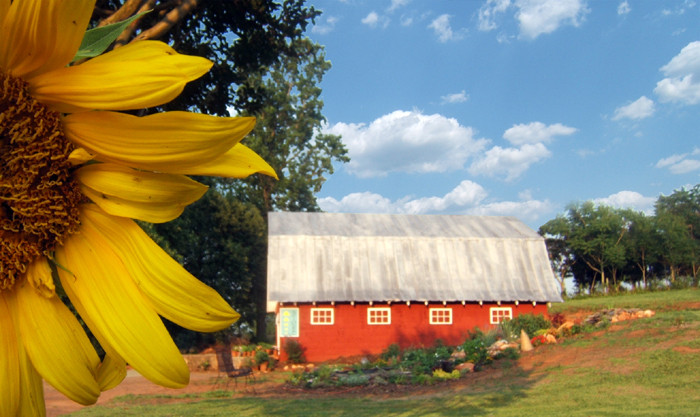 Red_Barn_With_Sunflower_Small.jpg