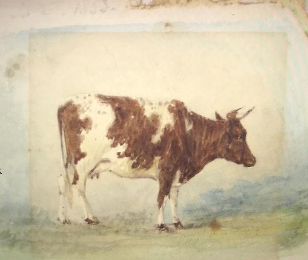 COW SKETCH 1853.jpg