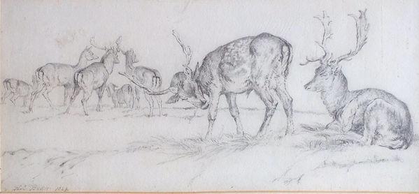 Deer sketch.jpg